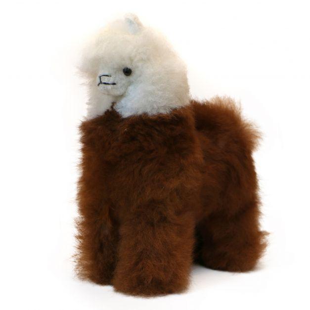 Alpaca bicolor