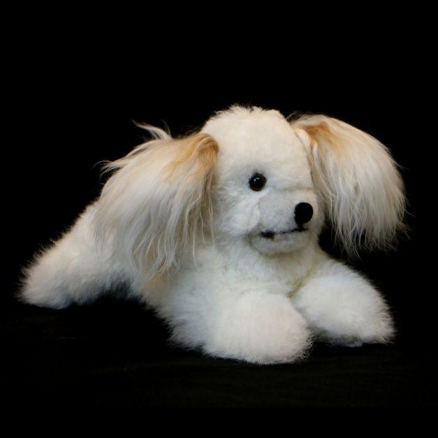 Perro bichón