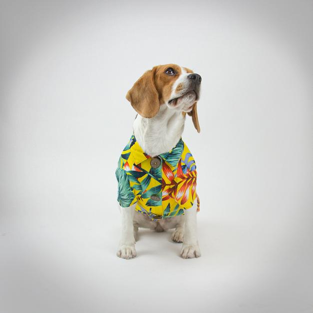 Camisa Pet Cocktail Summer