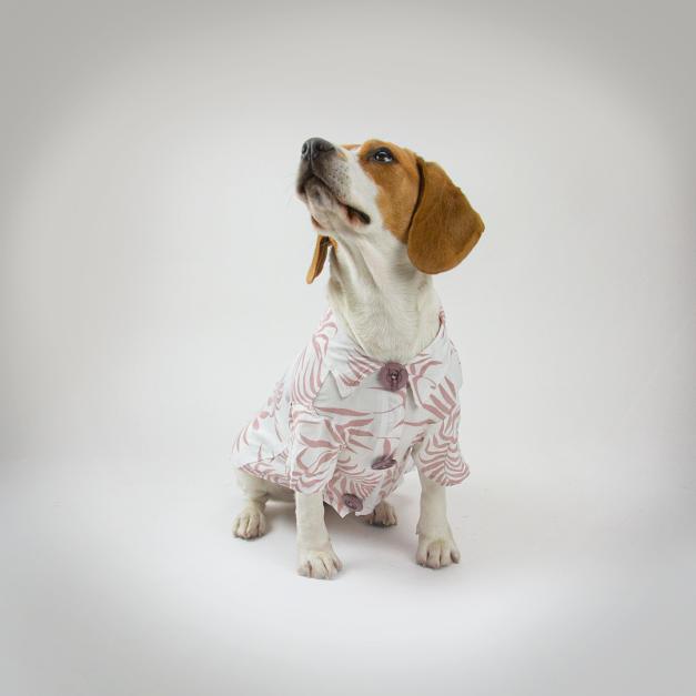 Camisa Pet Nude Bamboo