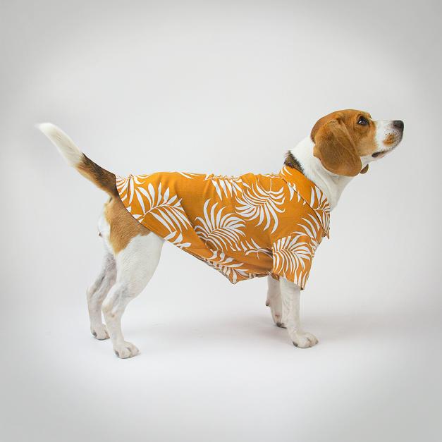 Camisa Pet Bamboo